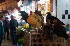 Venta de pollos en las calles de la medina de Fez, Marruecos