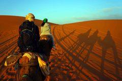 En una caravana de camellos en el Sahara, Marruecos