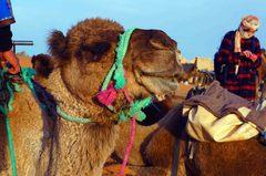 Caravana de camellos en el Sahara, Marruecos