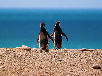 Península Valdés pinguinos.jpg