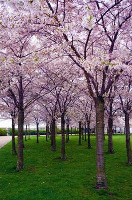 Primavera en el parque Langelinie, Copenhague