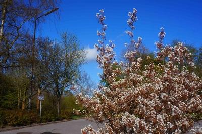 Campus universitario de Odense
