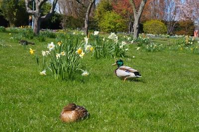 Aves en el Slottsrädgarden, Malmö