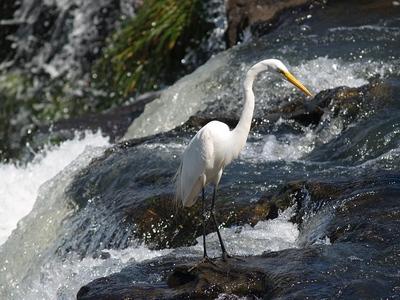 Aves en Iguazu.jpg