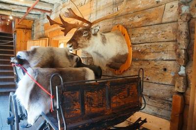 Cabeza de un reno en una casa de Bryggen, Bergen