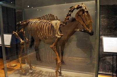 Reconstrucción de fósil en el Museo de Historia Sueca en Estocolmo