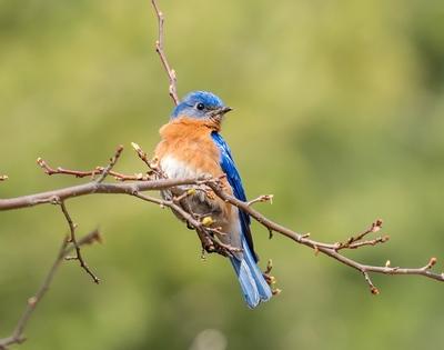 Fotografía de Aves.jpg