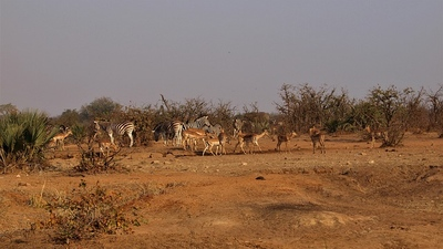 Parque Kruger.jpg