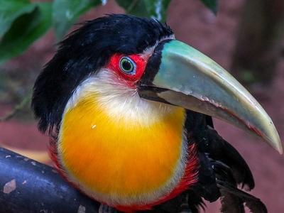 Ave en Iguazú.jpg
