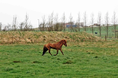 Granja de caballos islandeses, al sur de Islandia