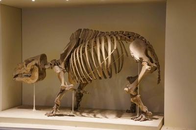 Un fósil en el Museo de Historia Natural de Londres