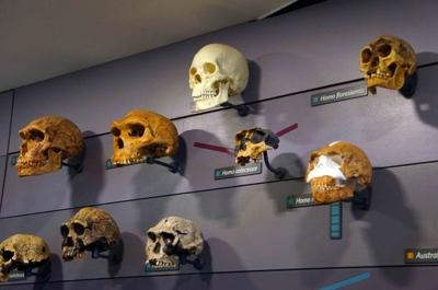 Especies humanas en el Museo de Historia Natural de Londres
