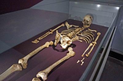Esqueleto humano en el Museo de Historia Natural de Londres