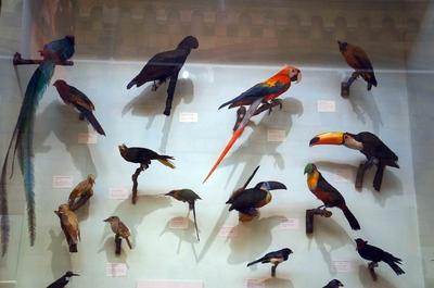 Aves disecadas en el Museo de Historia Natural de Londres
