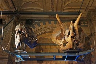 Cráneos de dinosaurios en el Museo de Historia Natural de Londres