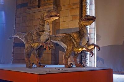 Dos velociraptors tamaño real en el Museo de Historia Natural de Londr