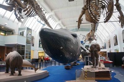 Sala de mamíferos en el Museo de Historia Natural de Londres