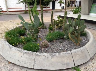 Cactus en la calle.jpg