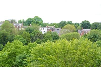 Bosques de Durham