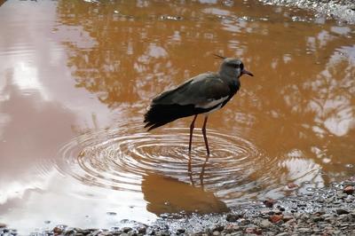 Aves Parque Iguazú.jpg