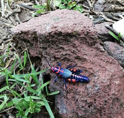 Un colorido insecto en Peña del Aire, México