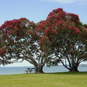 tree-141884_640.jpg