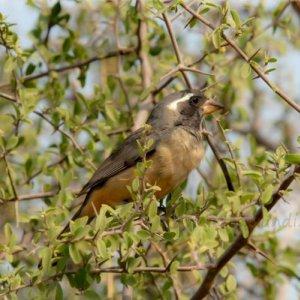 Aves de Argentina en el Parque Nacional Copo