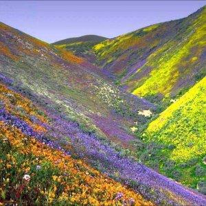 El desierto con sus flores