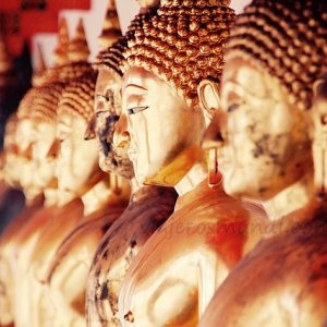 Budas de oro