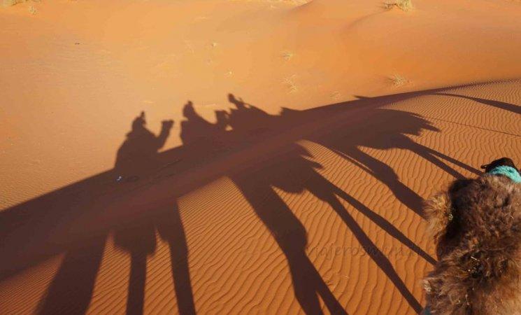 Sobre una caravana de camellos en el Sahara, Marruecos